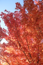 Fall Color.7247