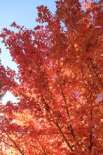 Fall Color.7248