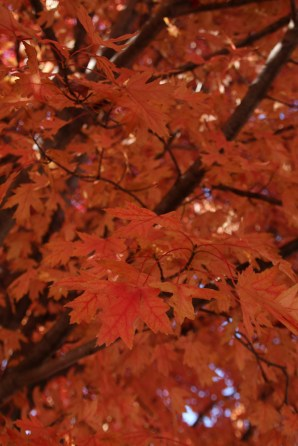 Fall Color.7251