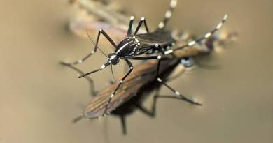 Dengue Fever Prevention, Treatment And Homeopathic Mediines