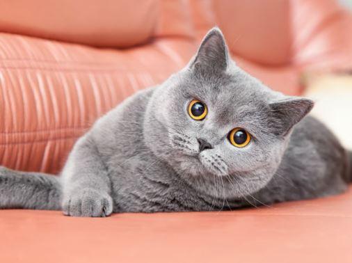 El país que más ama los gatos según WorldAtlas