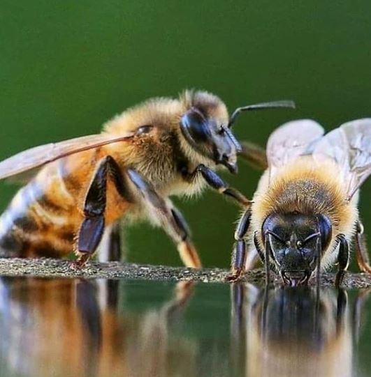 La hembra domina a los machos en estas 5 especies