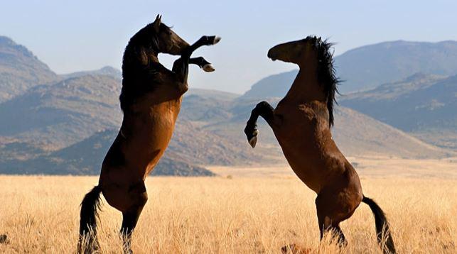 Datos curiosos sobre los caballos