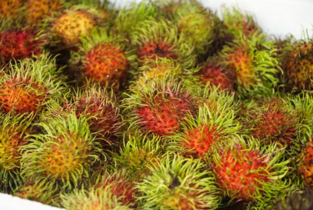 rambutan-fruta