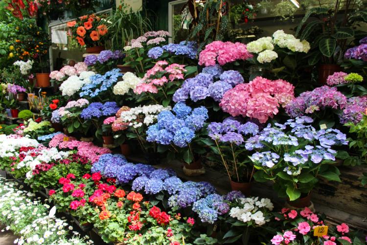 Marché aux fleurs, mercado de las flores - Paris, Francia