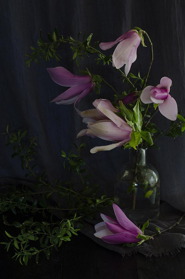 Flores Magnolio Rosa