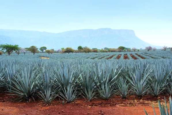 Tequila-Clases-Anejo-Reposado-Blanco