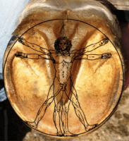 vitruvian man superimposed on hoof