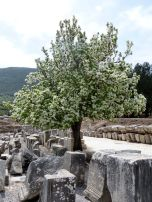 Another spring comes to Ephesus