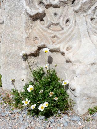 New life among the ruins - St John's Basilica, Selcuk