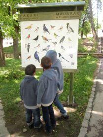 Bird watching, St George Park, Sfantu Gheorghe