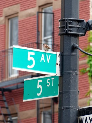 Corner of 5th and 5th, Park Slope