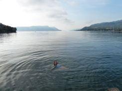 Prunella in the silky waters...