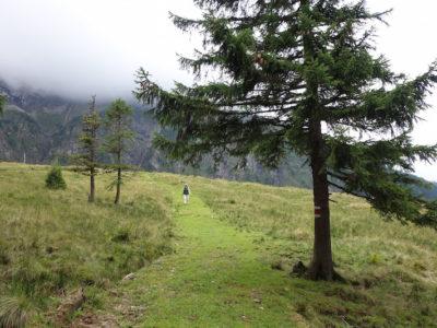 Wanderweg Oberlauelen