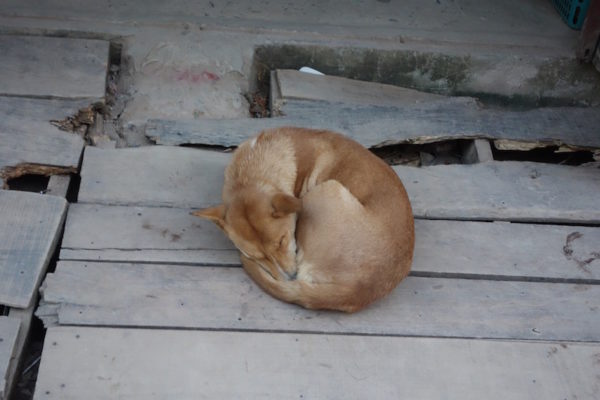 Runder Hund