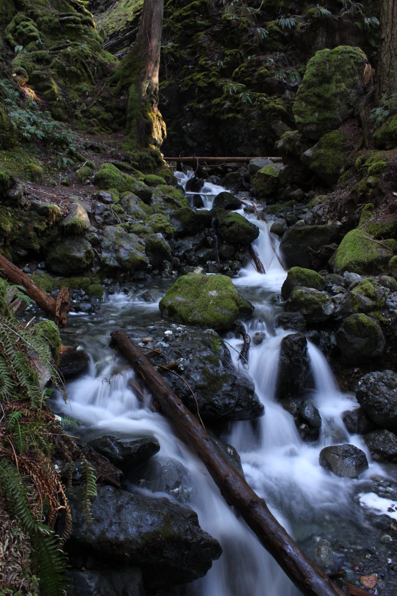 Lupine Falls in Strathcona Park
