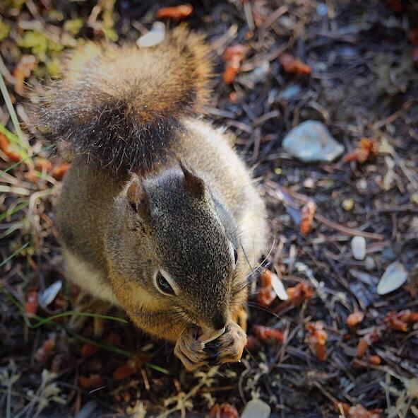 Sunflower Seed Squirrel
