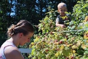 Helping Mom Pick The Raspberries