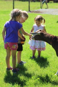 Pet Goats Help Keep Weeds Down And Produce Milk