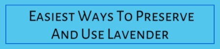 Easy Ways To Preserve And Use Lavender
