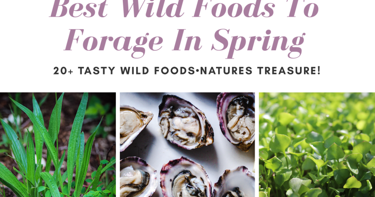 Find Your Own Food! Wild Foods To Forage In Spring