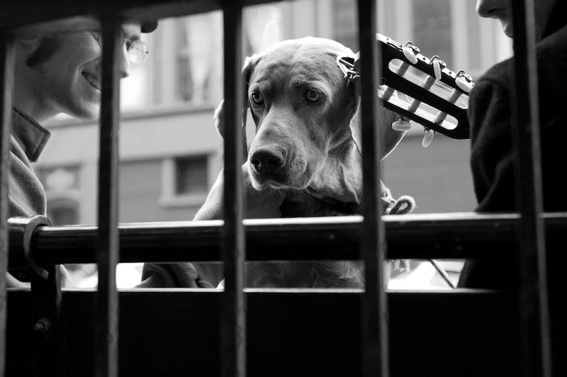 cece - urban dog port townsend 2012