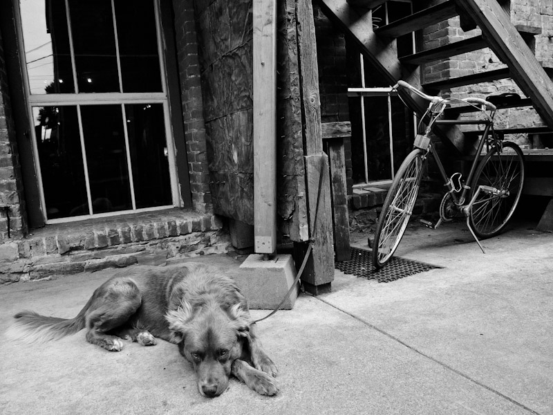 charlie - urban dog port townsend 2012