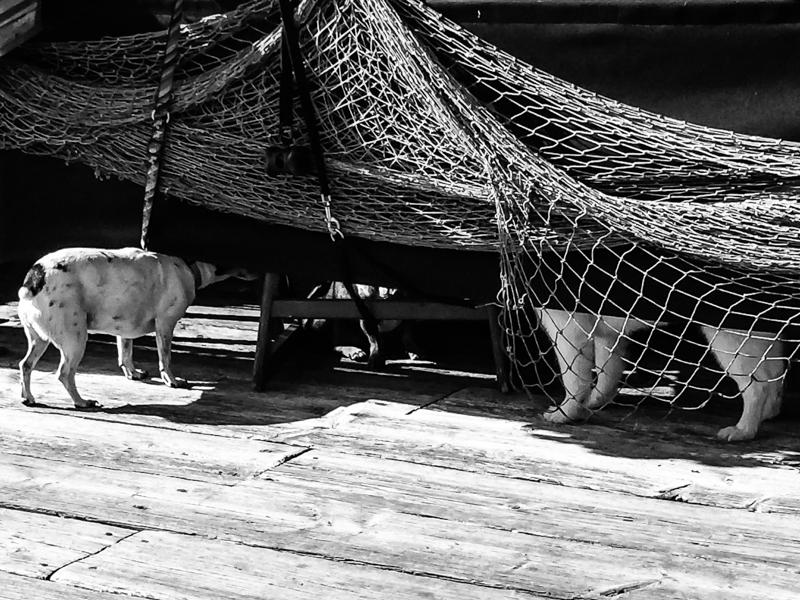 urban dog steveston 2014