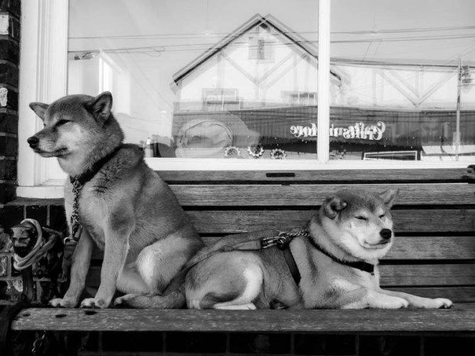 kisamos dogs - urban dog series steveston 2014