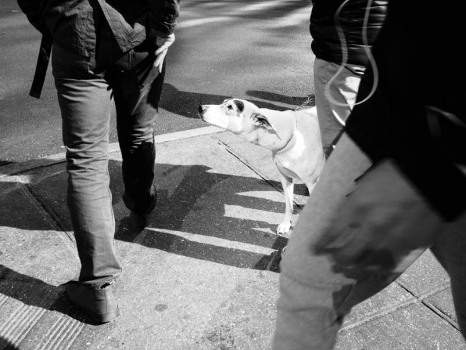 vinnie - urban dog series new york 2015