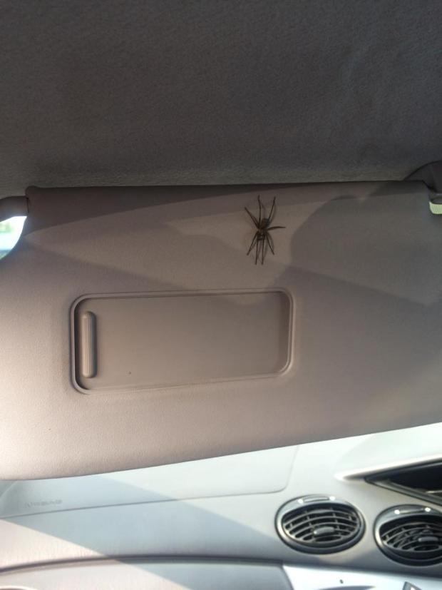 Spidermare