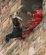 Goat-throwing-in-Spain