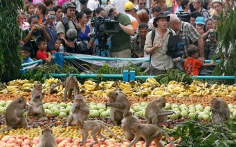 monkeys-tourists_2409773k
