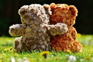 teddy-1361397_640