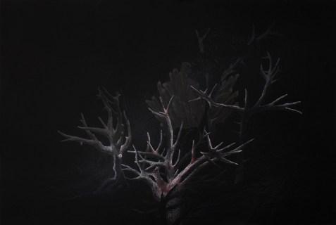 R.Blatman_Bleached_Coral1