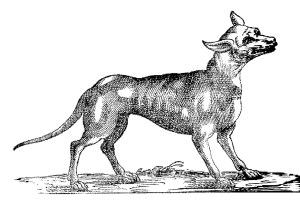 Mexican Wolf, Francisco Hernández, 1651