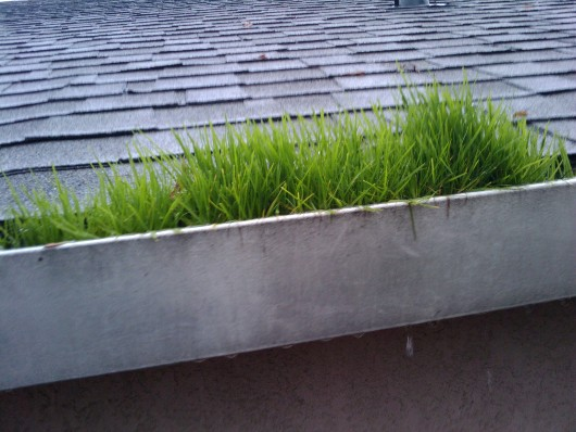 grass in gutters by lundquist appraisal company sacramento region