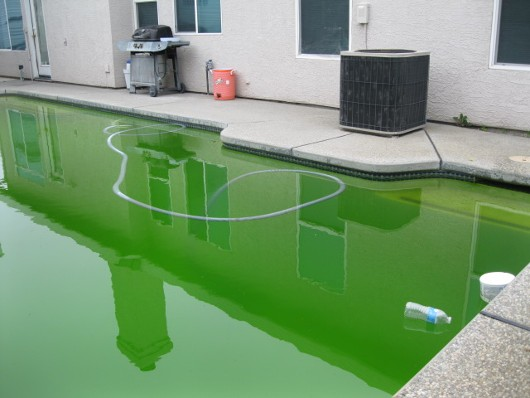 photo of green pool water