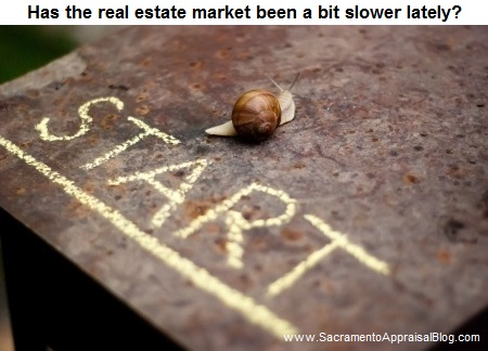 snail in a race photo 2 - bought by sacramento appraisal blog and used with permission