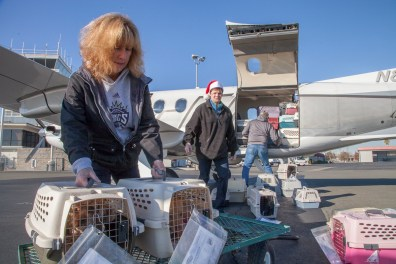 Gina Knepp, Front St. Shelter Director helps packs crates dogs into the delivery airplane.