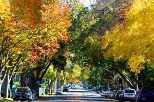 Fall in Sacramento