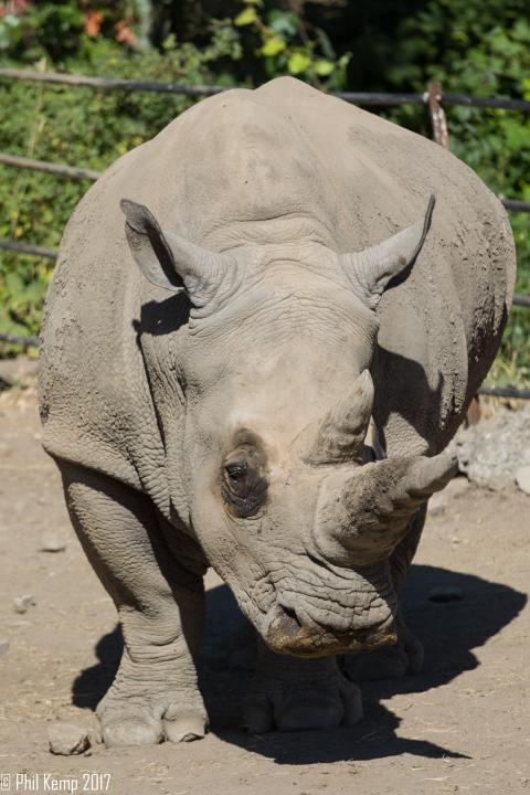 Safari West: Africa Hidden in the Santa Rosa hills