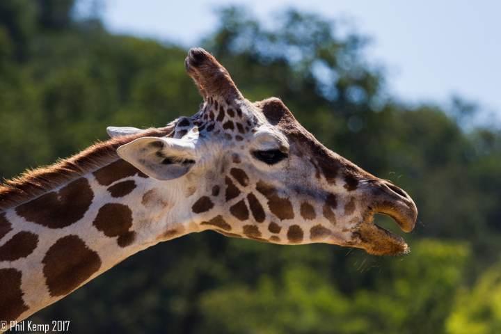 MG 4254 720x480 - Safari West: Africa Hidden in the Santa Rosa hills