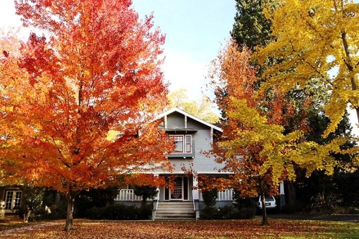 Fall in Sacramento 2017 10 720x480 - Sacramento: Best City in California for Fall Colors?
