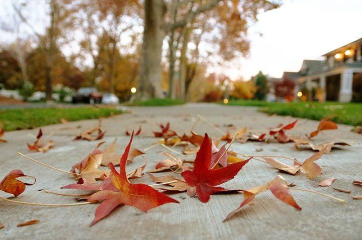 Fall in Sacramento 2017 15 720x478 - Sacramento: Best City in California for Fall Colors?