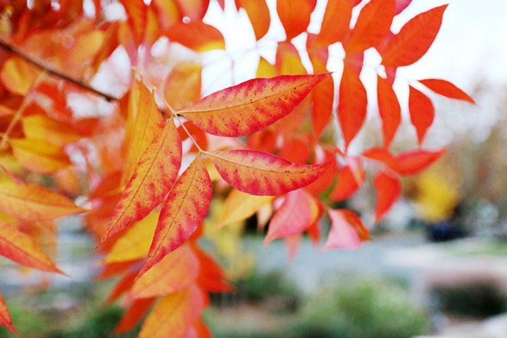 Fall in Sacramento 2017 17 720x480 - Sacramento: Best City in California for Fall Colors?