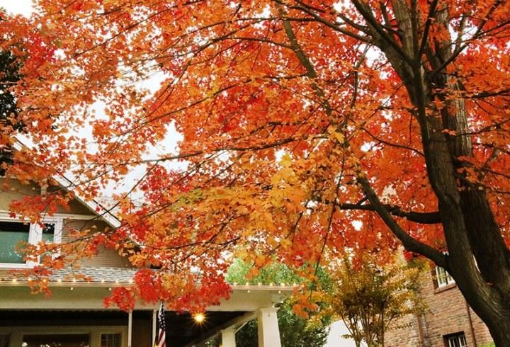 Fall in Sacramento 2017 19 720x490 - Sacramento: Best City in California for Fall Colors?