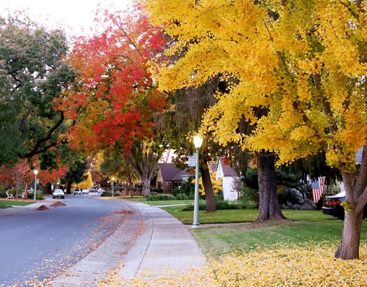 Fall in Sacramento 2017 2 720x564 - Sacramento: Best City in California for Fall Colors?