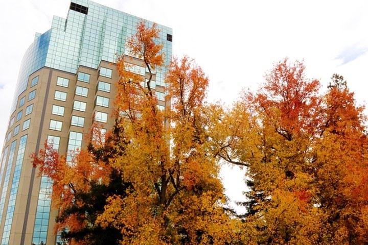 Fall in Sacramento 2017 22 720x480 - Sacramento: Best City in California for Fall Colors?