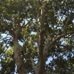 Sacramento On Treepedia Study List
